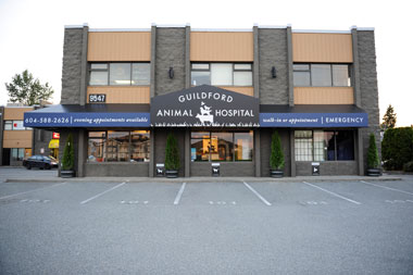 GUILDFORD ANIMAL HOSPITAL